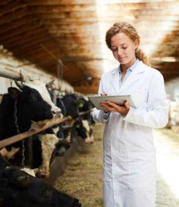 Una veterinaria analitza diverses vaques